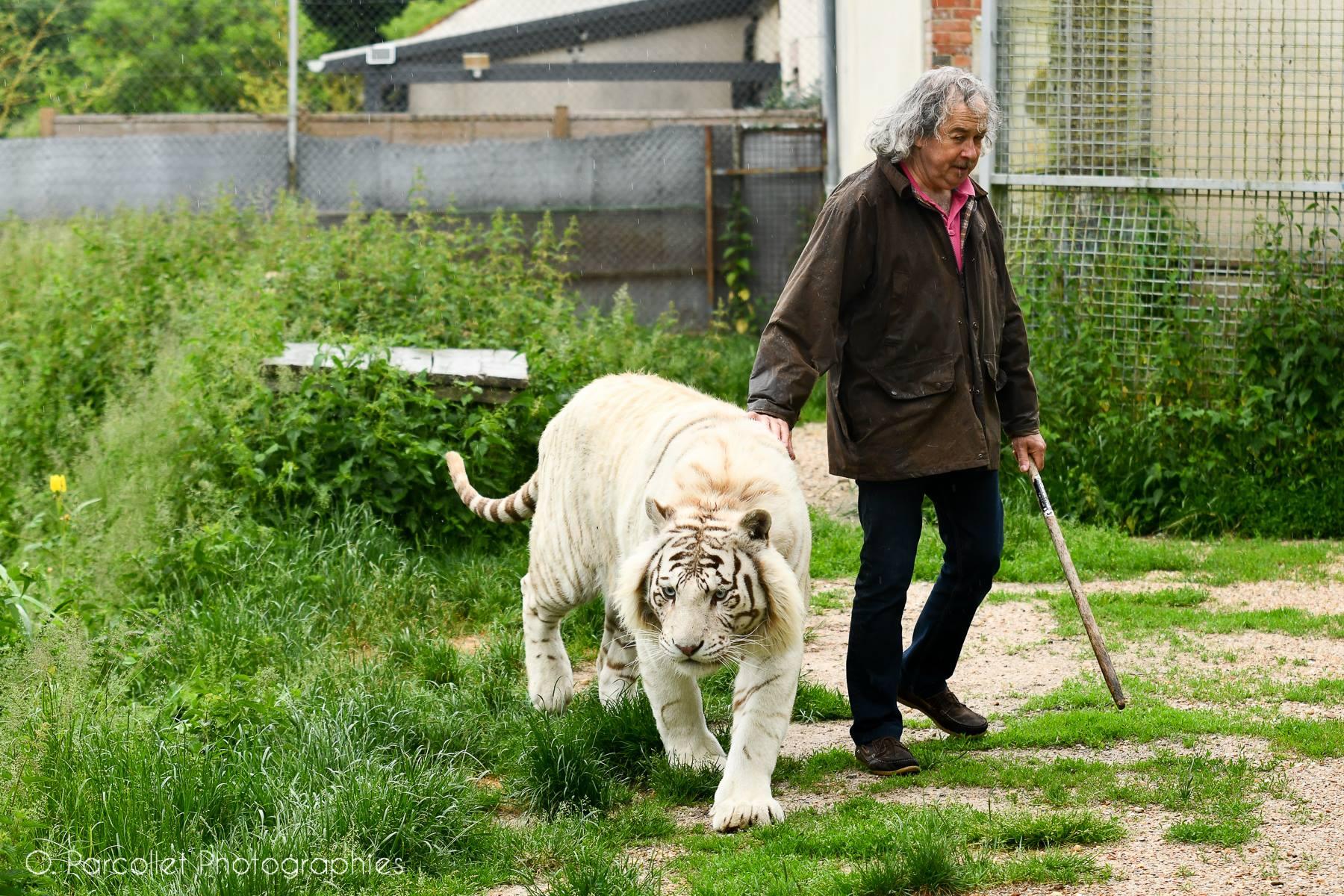 Bienvenu chez les tigres