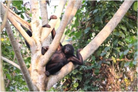 site de rencontre bonobo rencontrer femme musulmane france