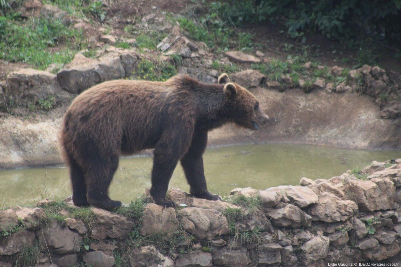 Pour des déplacements sécuritaires au pays des ours - Les parcs nationaux des montagnes
