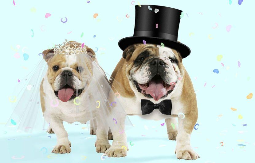 site de rencontre pour proprietaire de chien rencontre femme ronde mariage