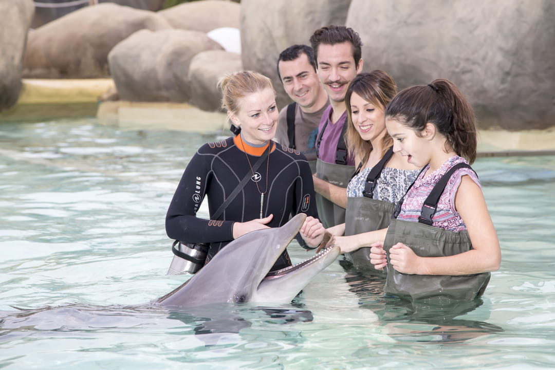rencontre avec les dauphins marineland forum