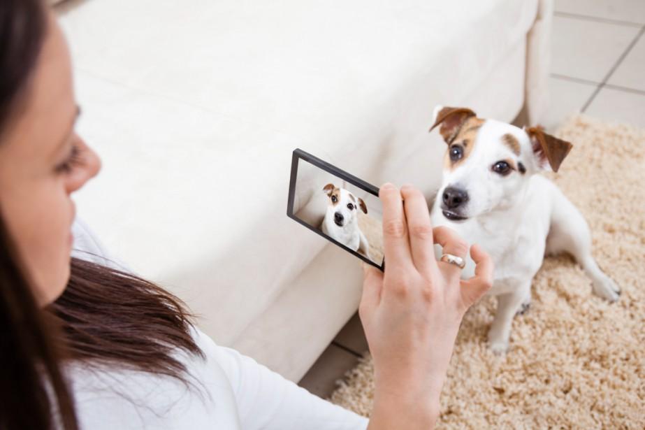 site pour rencontre de chien
