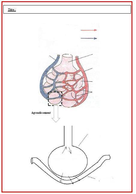 recherche sur la respiration de lhomme