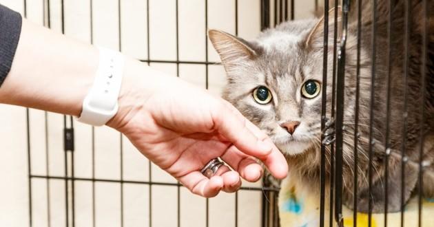 site rencontre animaux chat site de rencontre divorces